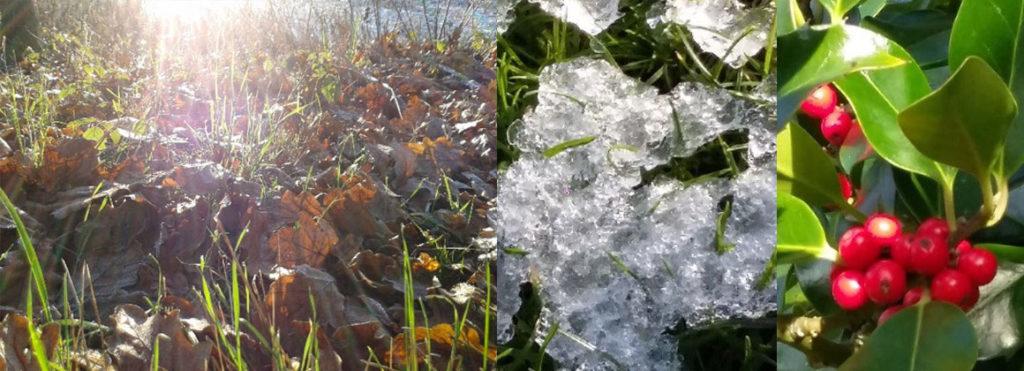 Winter Mindfulness in the Garden Workshop